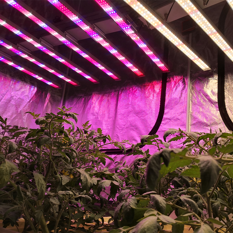 600W LED Grow light Red Blue Ratio